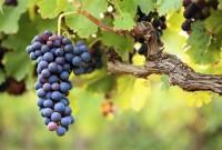 """Bègles fête le vin! """"Vin de Graves, vin de Palus, quand le vin était tiré à Bègles"""""""